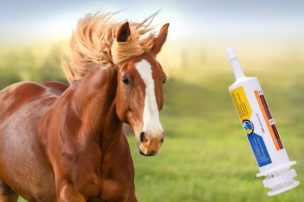 dosing syringes for horses
